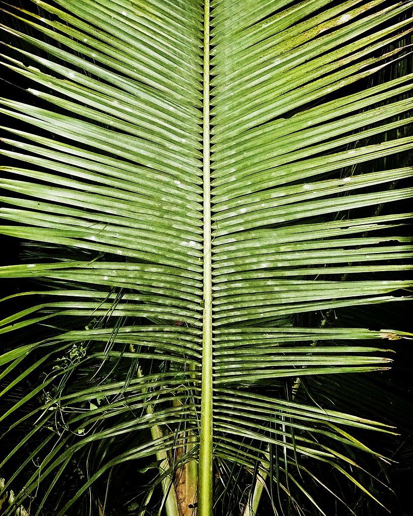 Jungle-Book-Frederike-Wetzels-00635.jpg